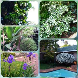 Garden Spring 2015